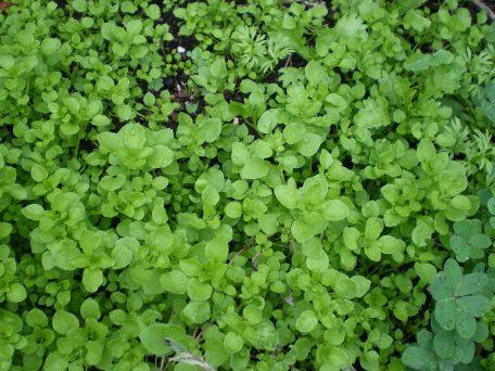 weeds june 2014 028