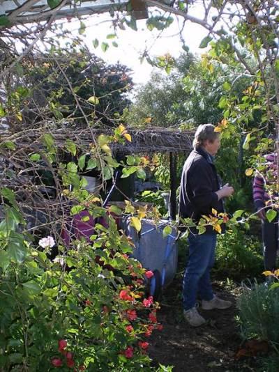 Di's garden 2