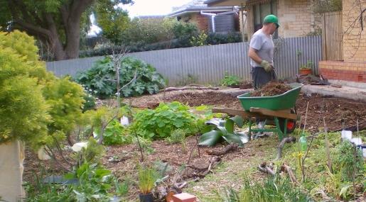 garden pond july 2014 016 - Copy