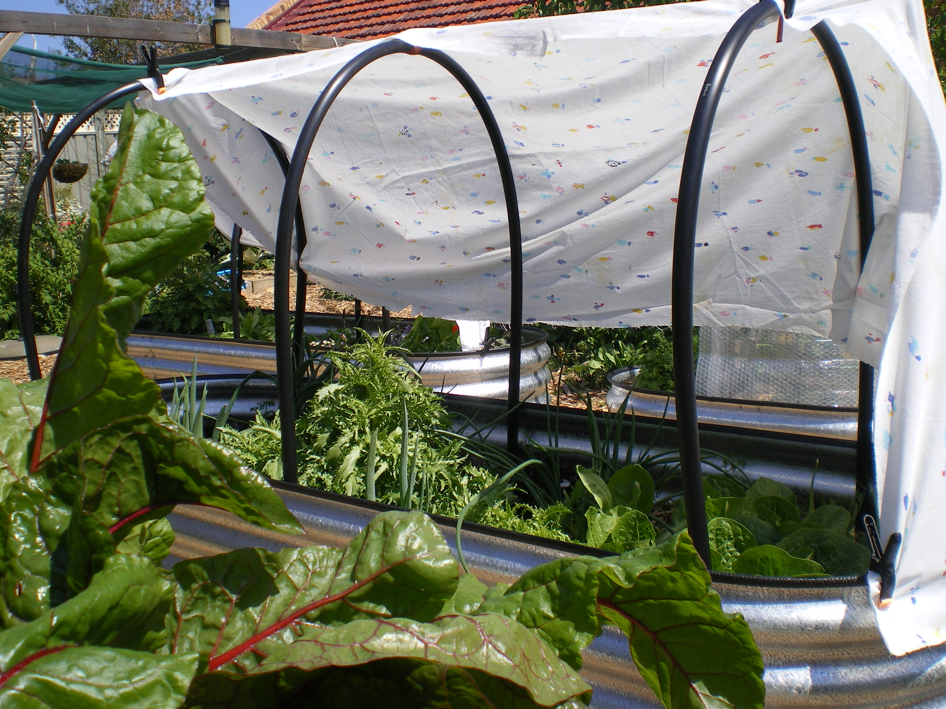 Easy garden shade Sustainable in Holdfast Bay