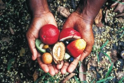 aboriginal-food