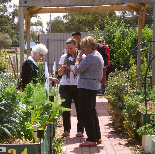 cCommunity garden open day 16 Nov '14 017