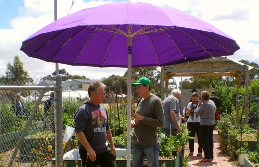 cCommunity garden open day 16 Nov '14 018