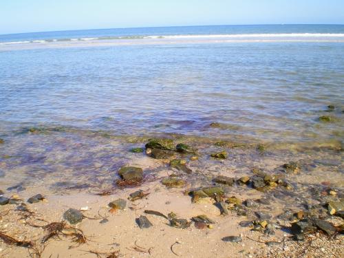 beach 25 aug 2014 006 - Copy